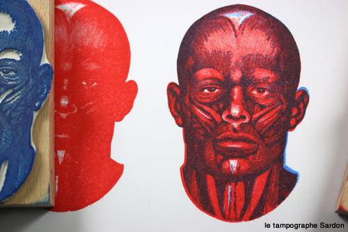 Image of Anatomie de la face - Facial anatomy