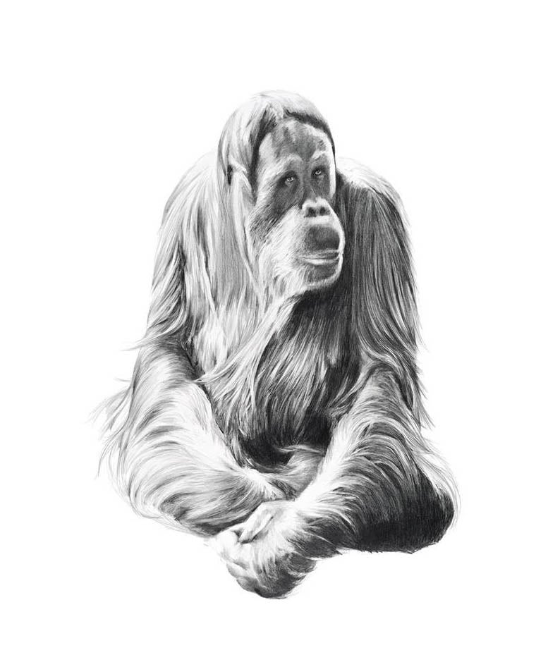 Image of 'GYPSY' Limited Edition Print