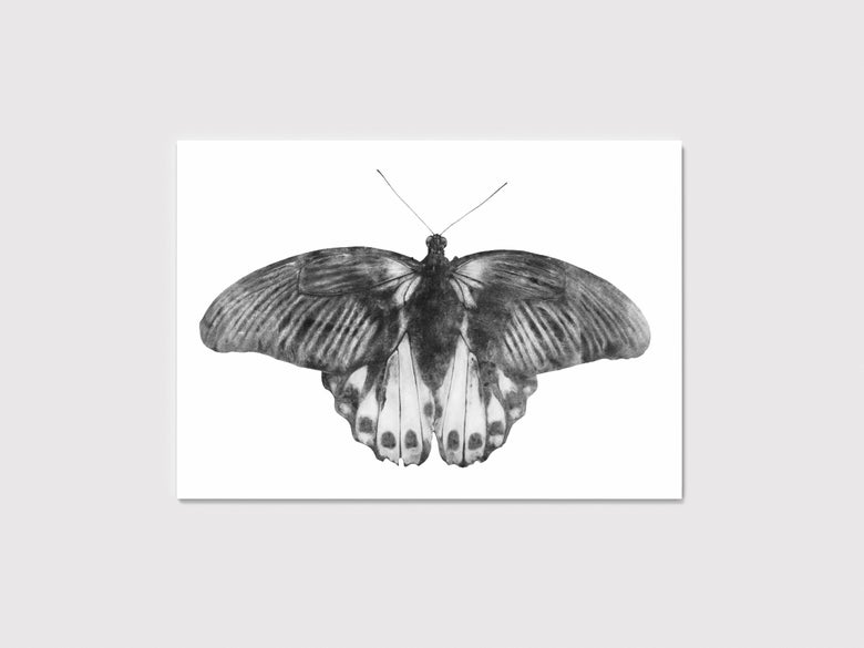 Image of Butterfly
