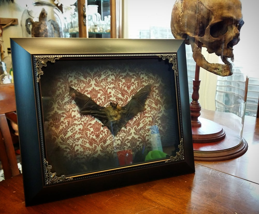 Image of 8x10 bat display under glass