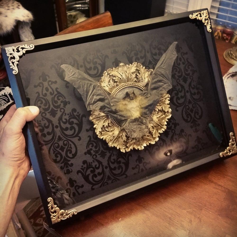 Image of 14x16 large bat shadowbox