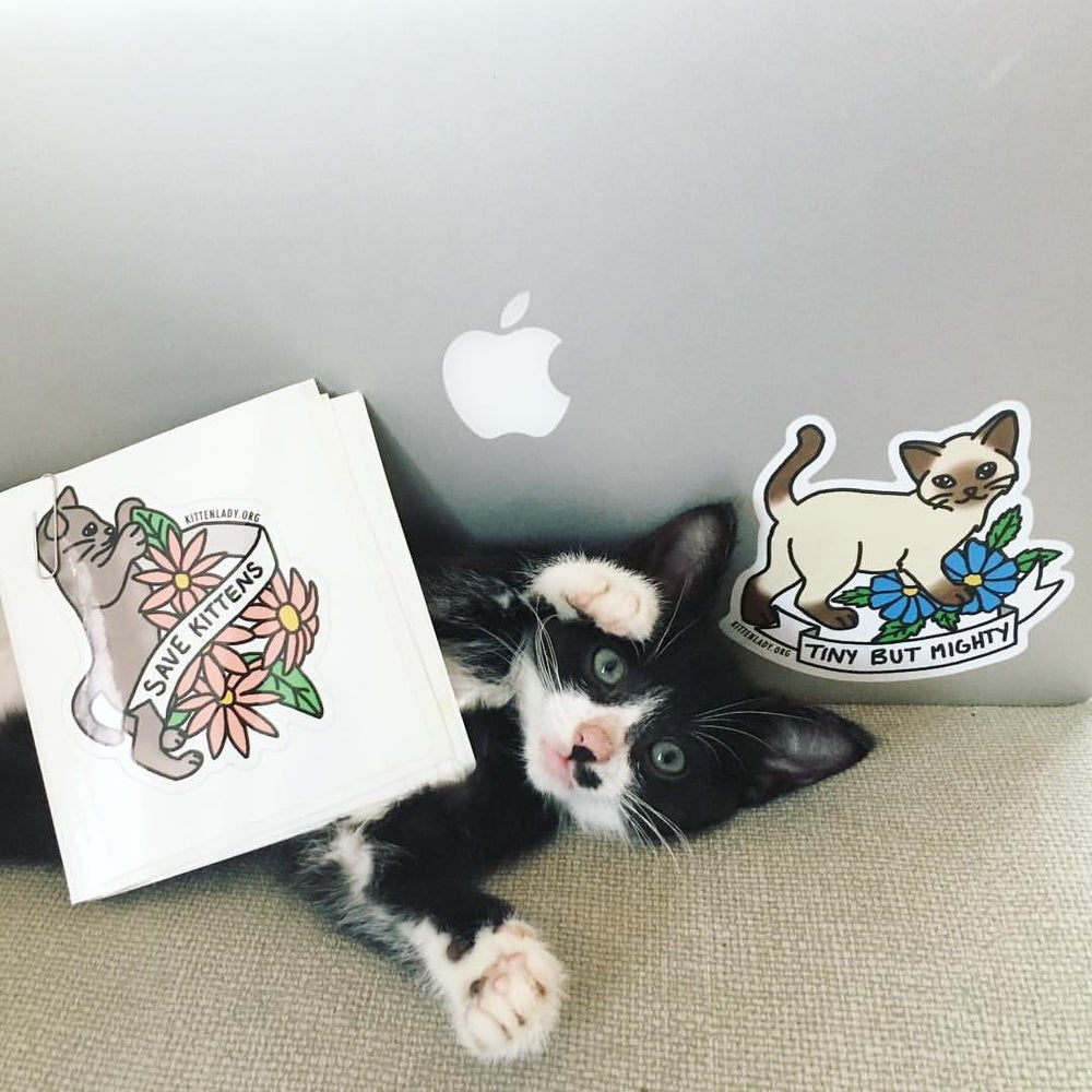 Image of Save Kittens Sticker Set