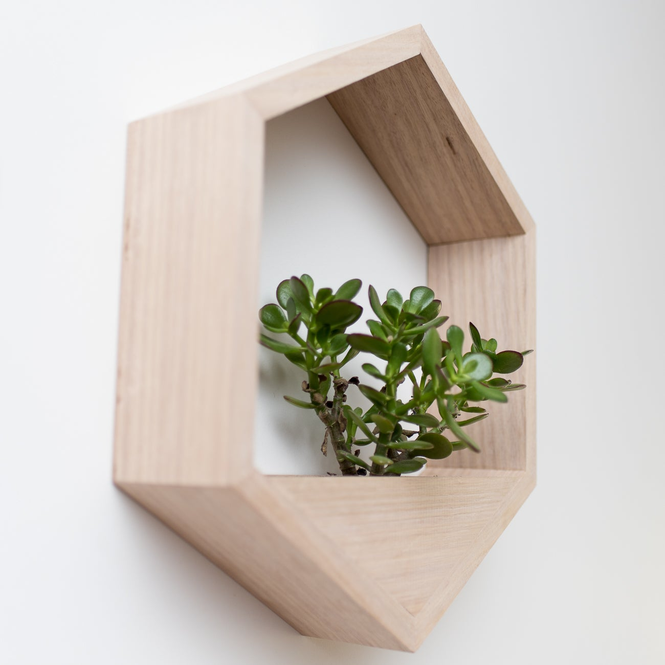 Image of Junior Hanging Planter