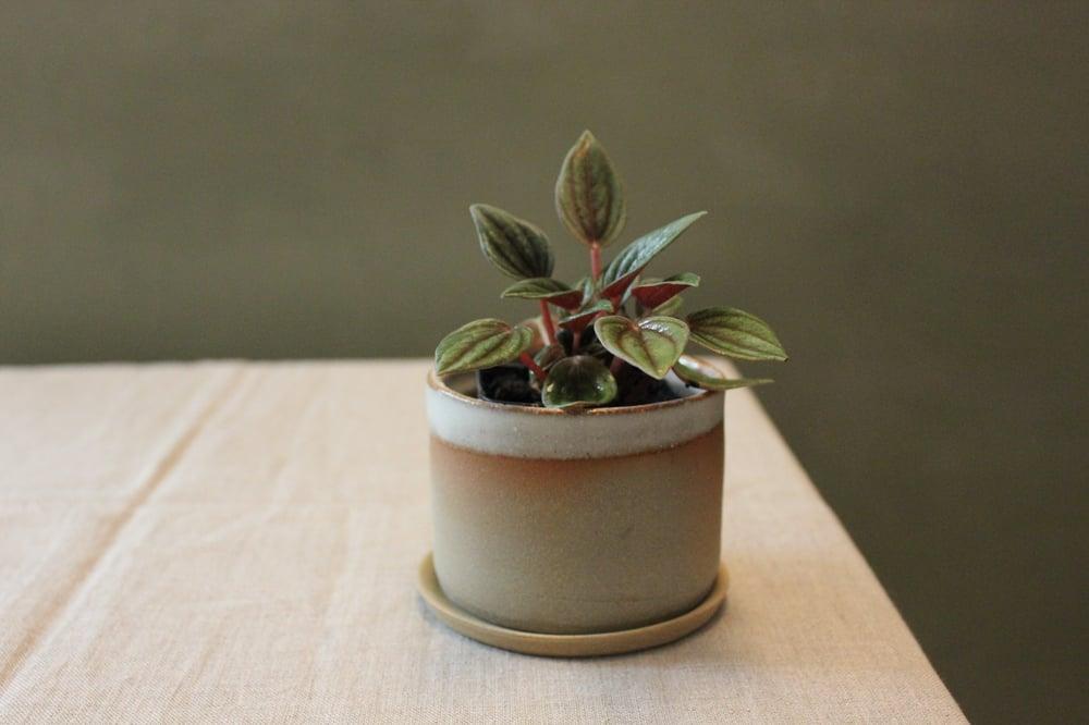 Image of Desert Planter Small
