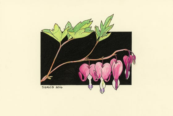 Image of Bleeding Heart