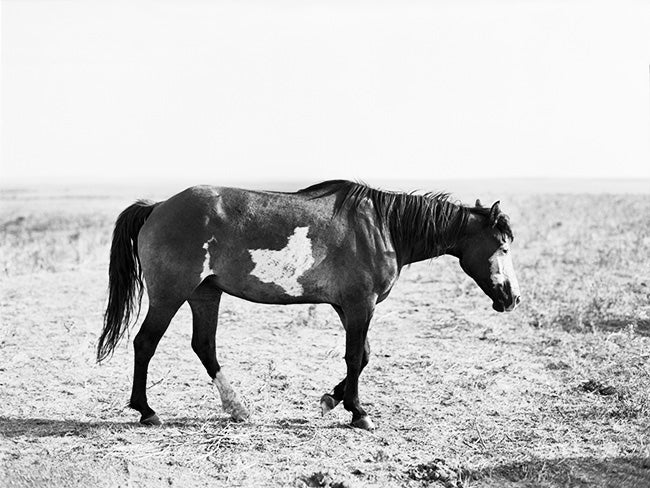Image of mustangs of the west no.14