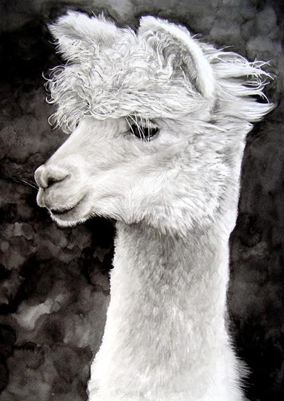 Image of 'Alpaca' by Hazel Adams