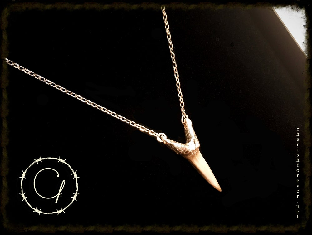 Image of Shark's Tooth Necklace