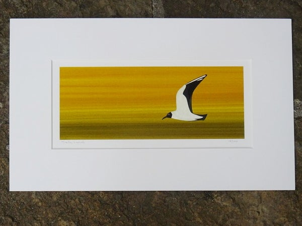 Image of Black headed gull Limited Edition Print