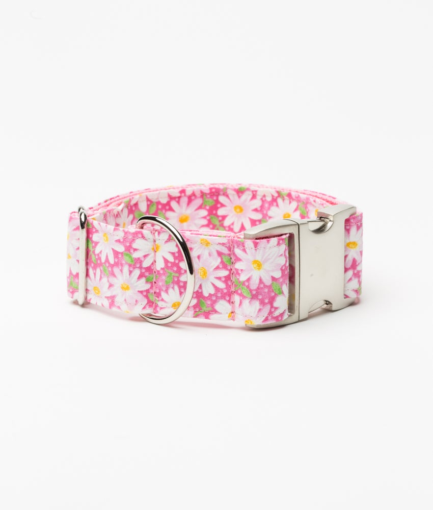 Painted Daisies Dog Collar