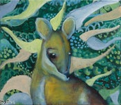 Image of Wallaby
