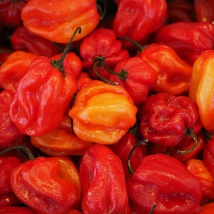 Image of Scotch Bonnet Pepper Sauce