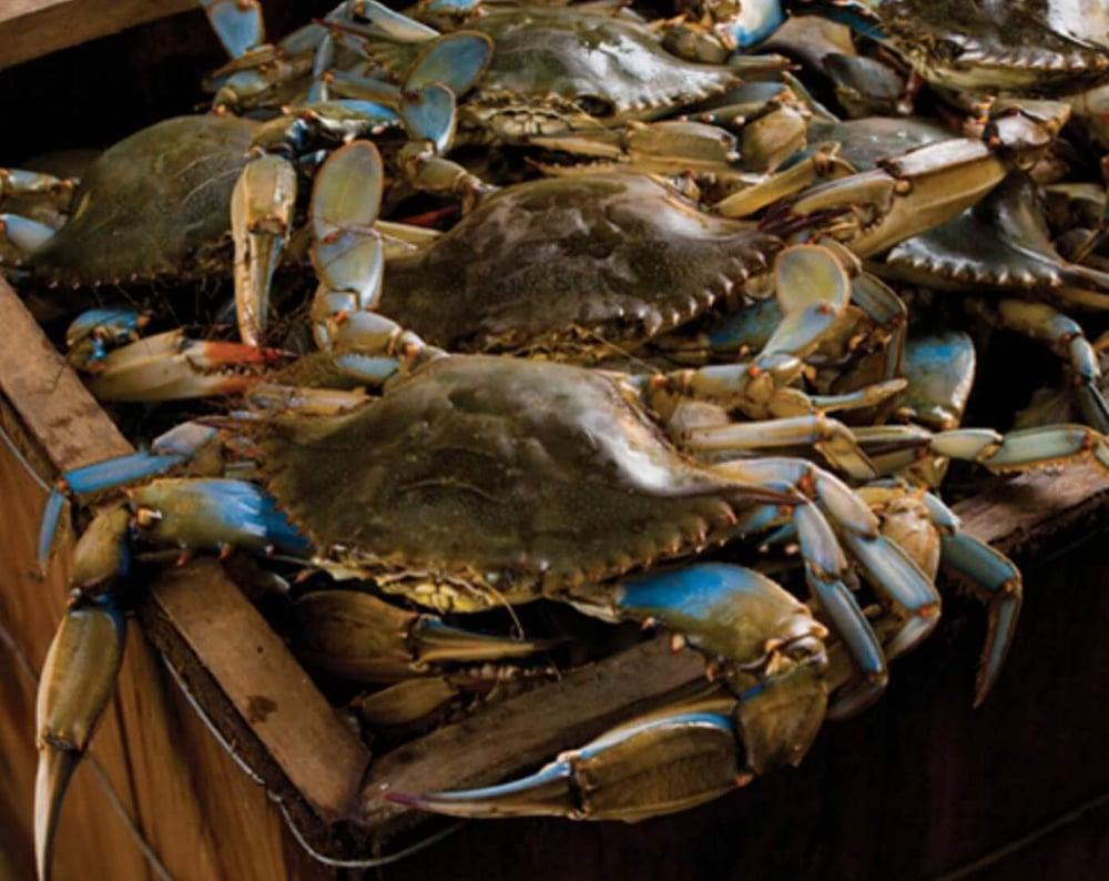 Image of #1 Blue Lake Crabs 45 lbs.