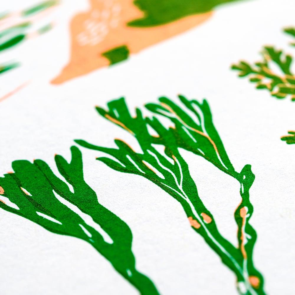 Image of Sea Greens - 2016 Newlyn Fish Festival print