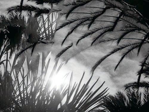 Image of Dark Palms