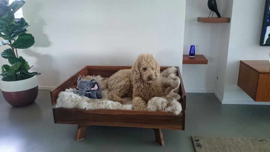 Image of Doggy day bed