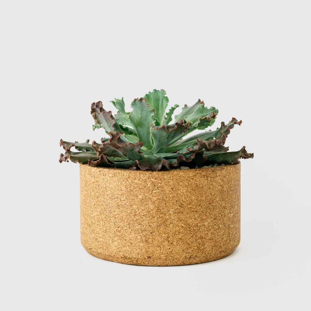 Image of Low Cork Planter 9.5""