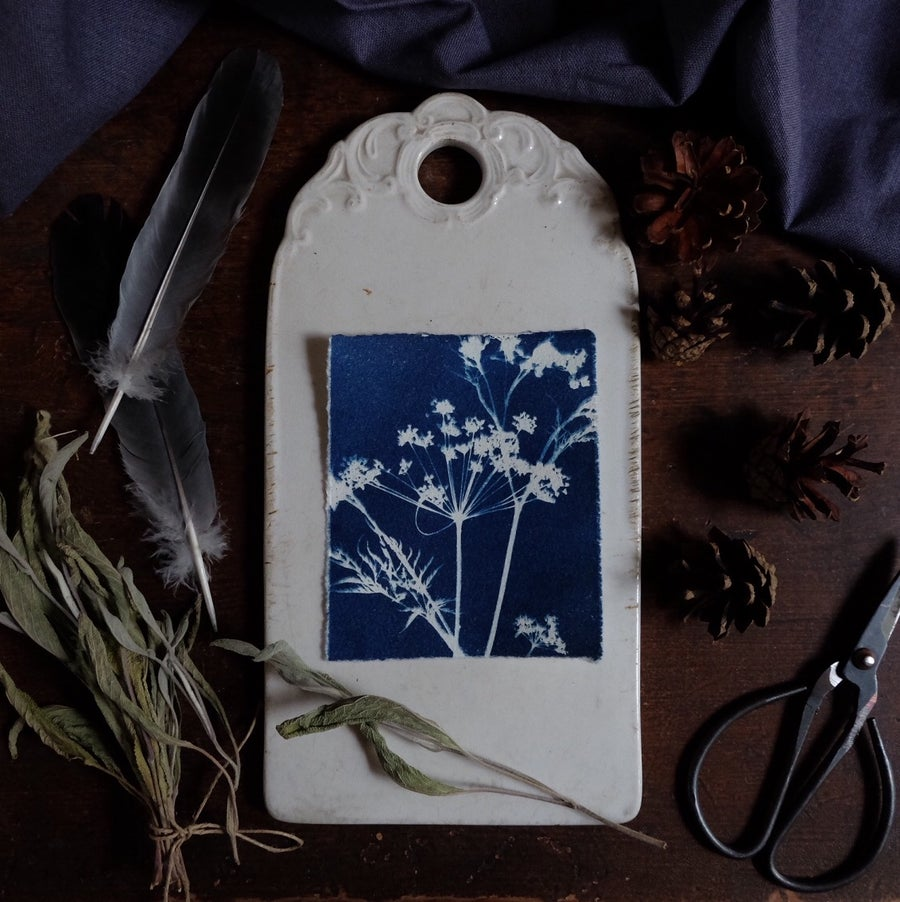 Image of Cyanotype print, Cow parsley