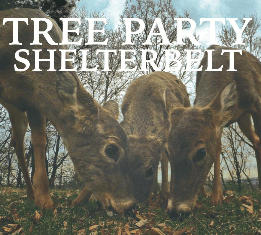 Image of Shelterbelt
