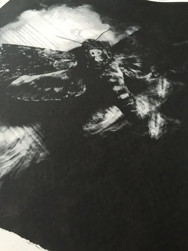 "Image of ""Moth"" Art Print"