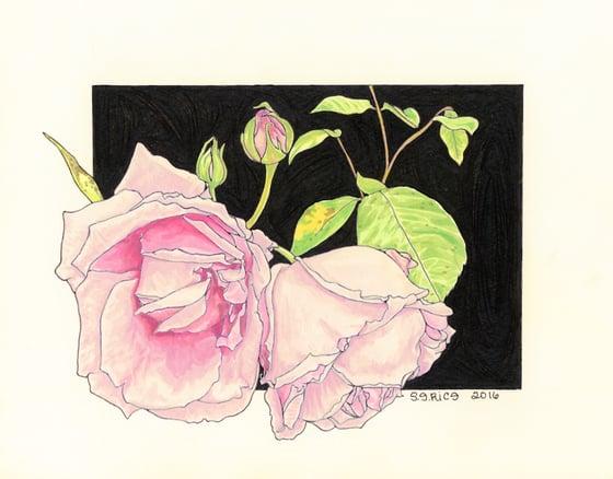 Image of Rosa-Madame Caroline Testout