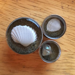 "Image of Seashell plugs (sizes 2g-2"")"