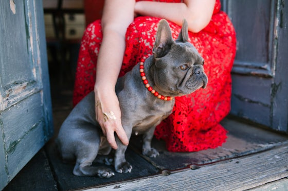Image of Coffee Drop ~ Taupe and Red Beaded Dog Necklace