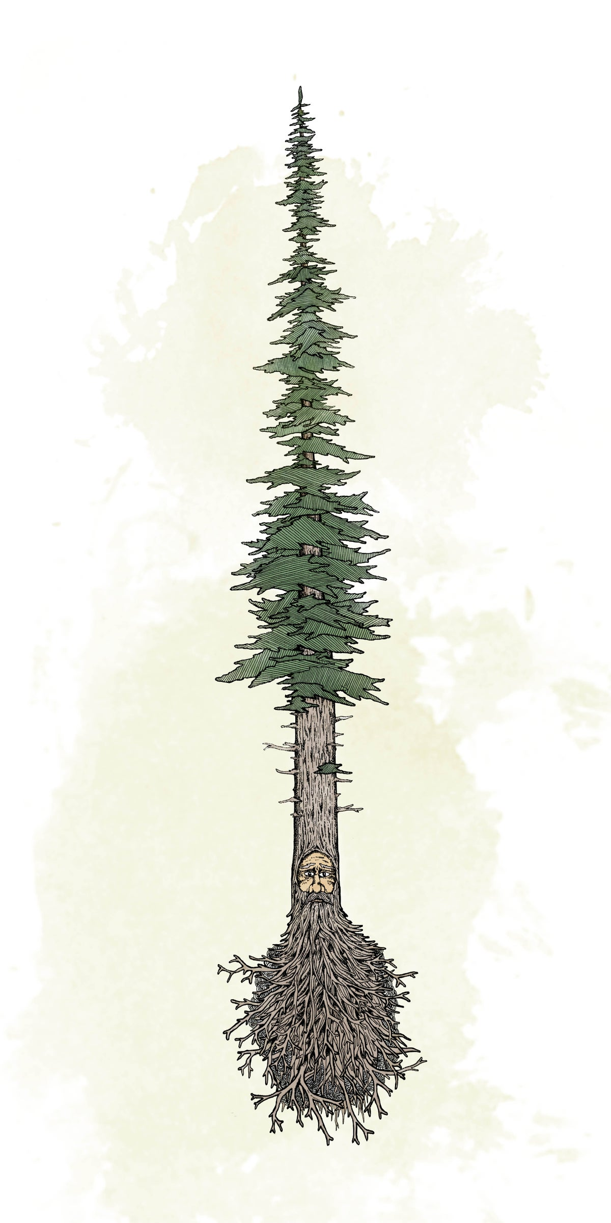 Image of Pine Beard