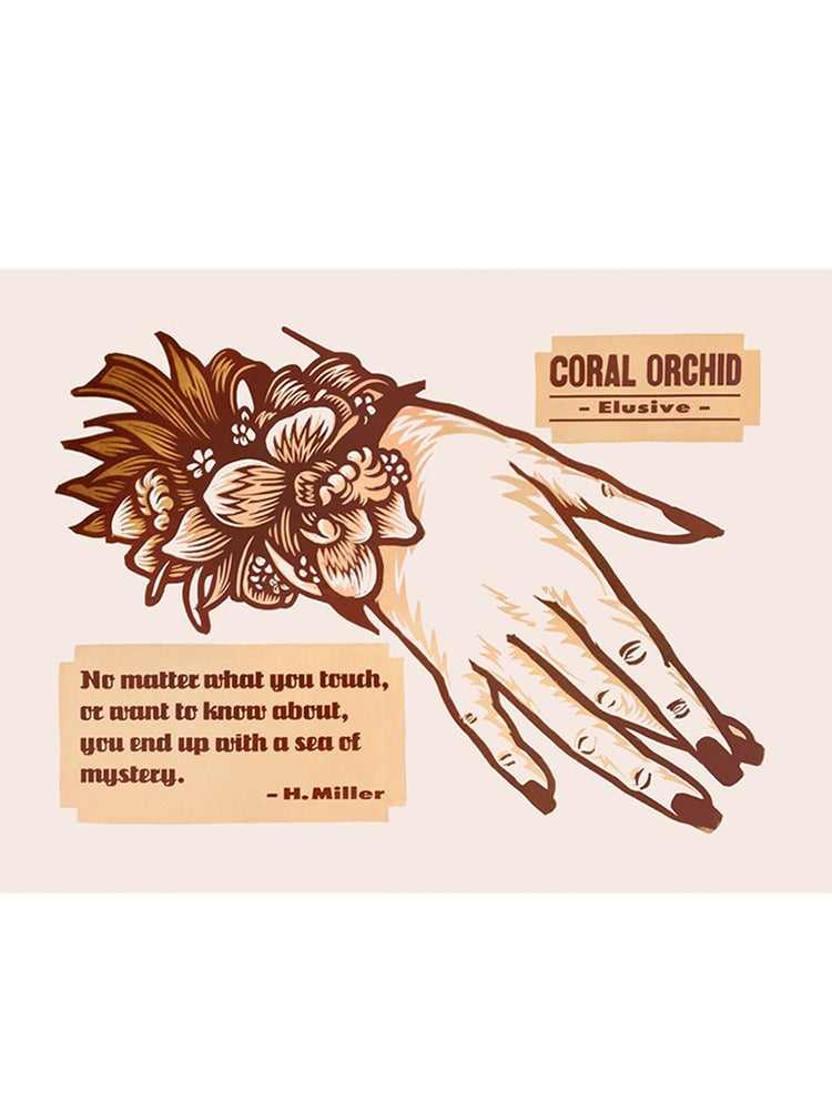 Image of Coral Orchid