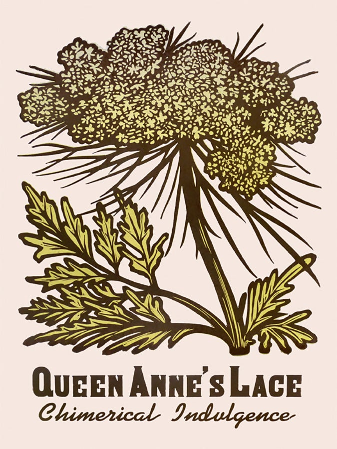 Image of Queen Anne's Lace