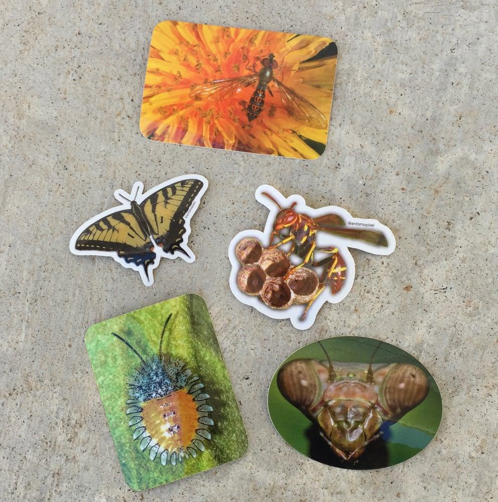 Image of Entomopixel Sticker Pack