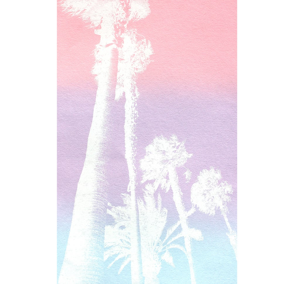 Image of White Palm Trees