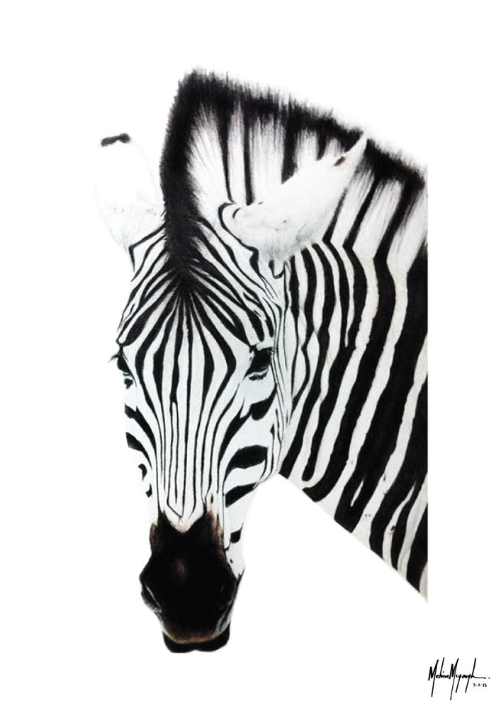 Image of Zebra - Limited Edition
