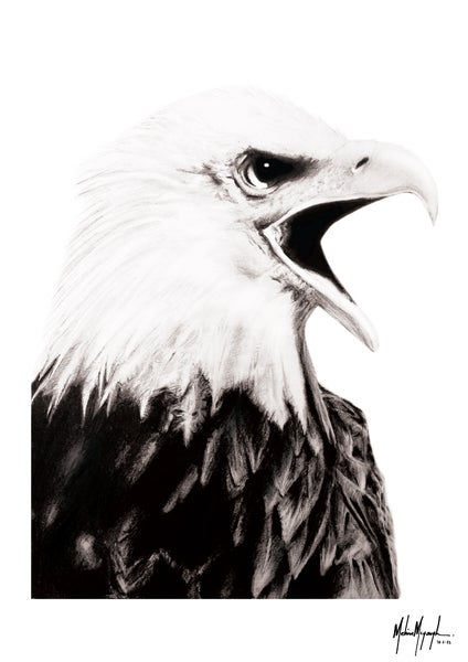 Image of Bald Eagle - Limited Edition