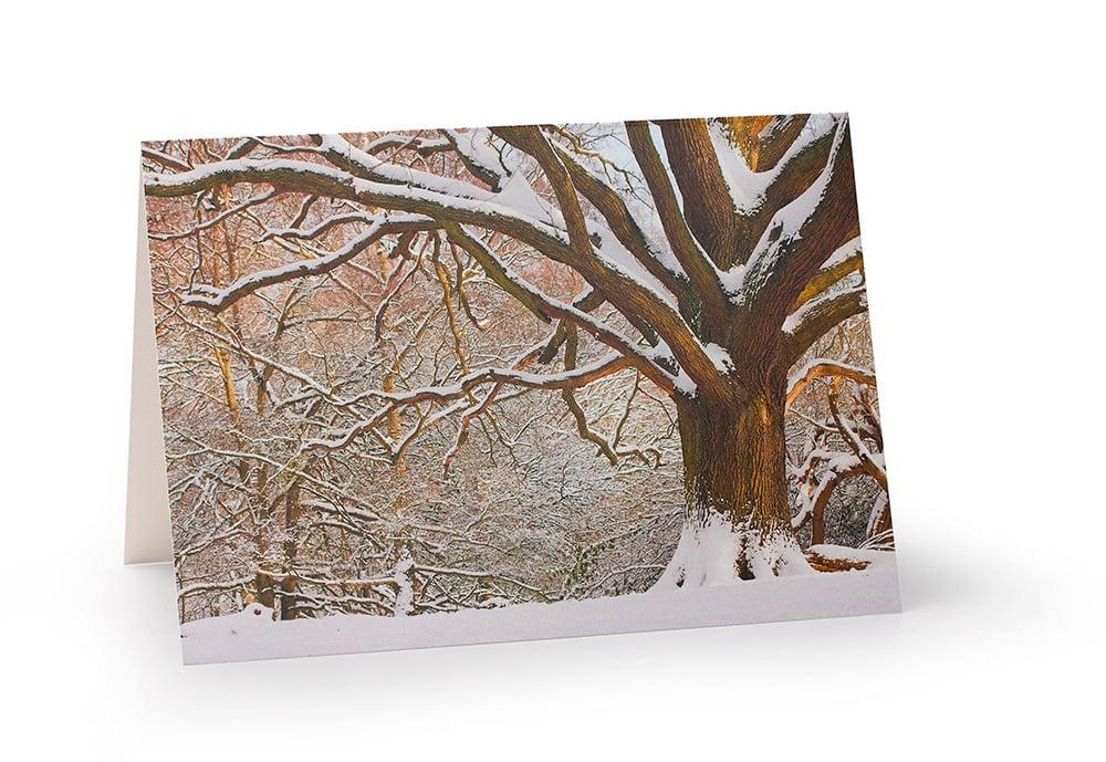 Image of Winter Oak
