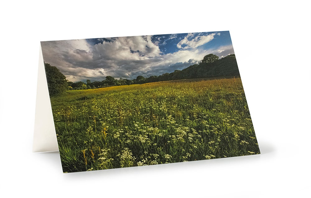 Image of Wildflower Field