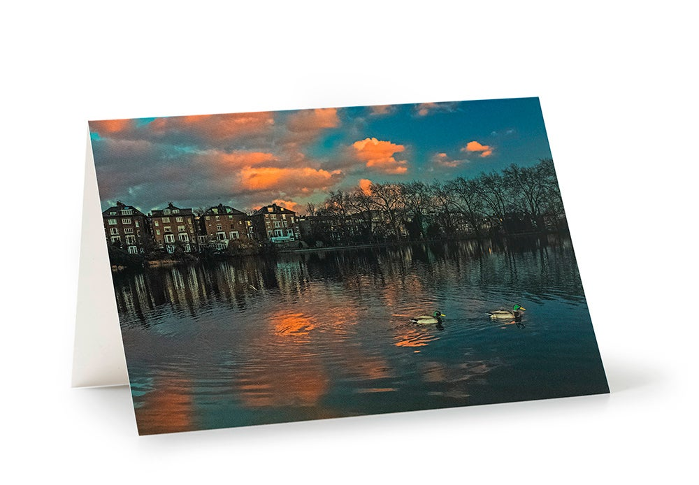 Image of Mallards at Dusk