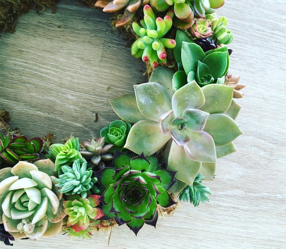 Image of Succulent Wreath