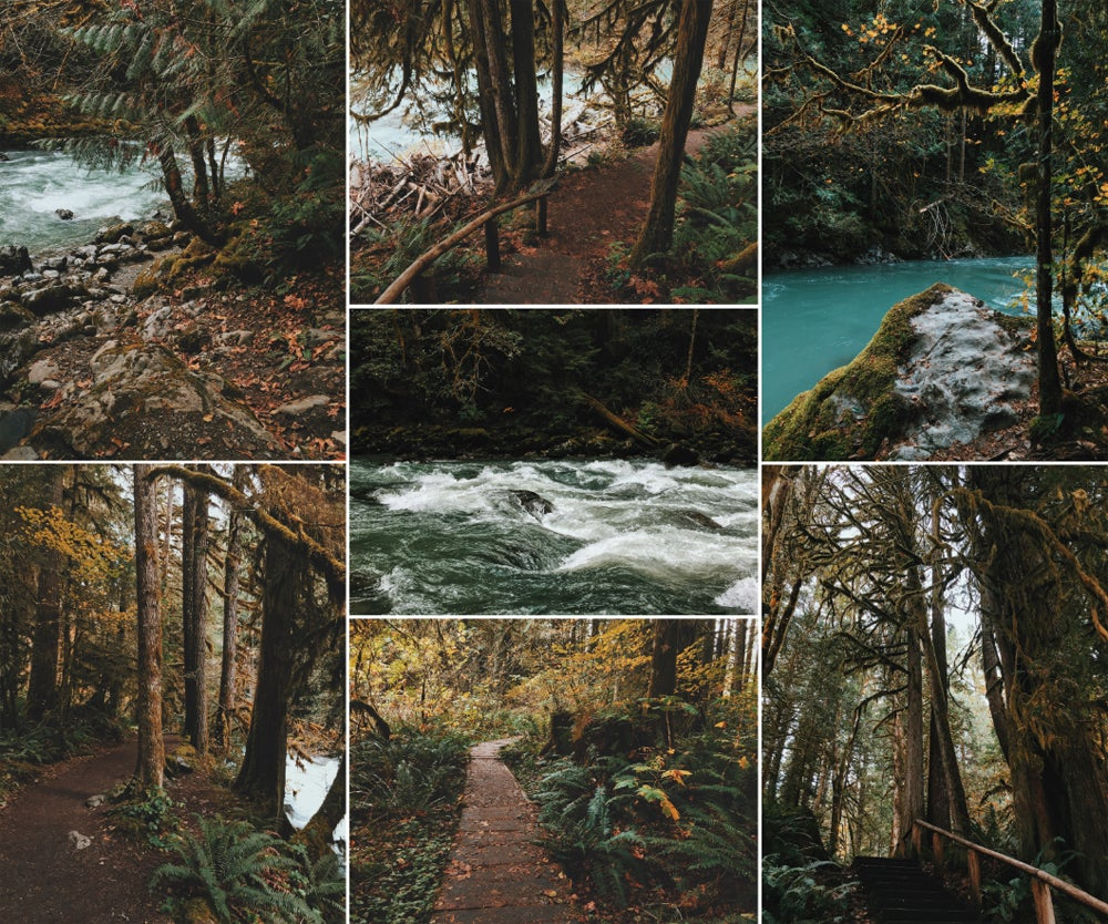 Image of PNW Forest Trail print set