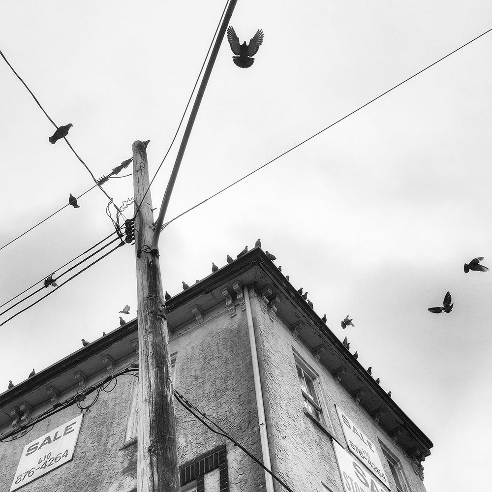 Image of Birds on a Building by Jessica Kourkounis