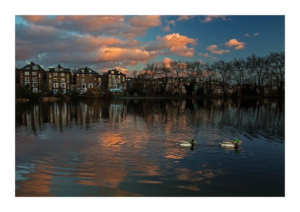 Image of Mallards at dusk Print