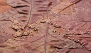 Image of Leaf Stitching: 6 postcard pack