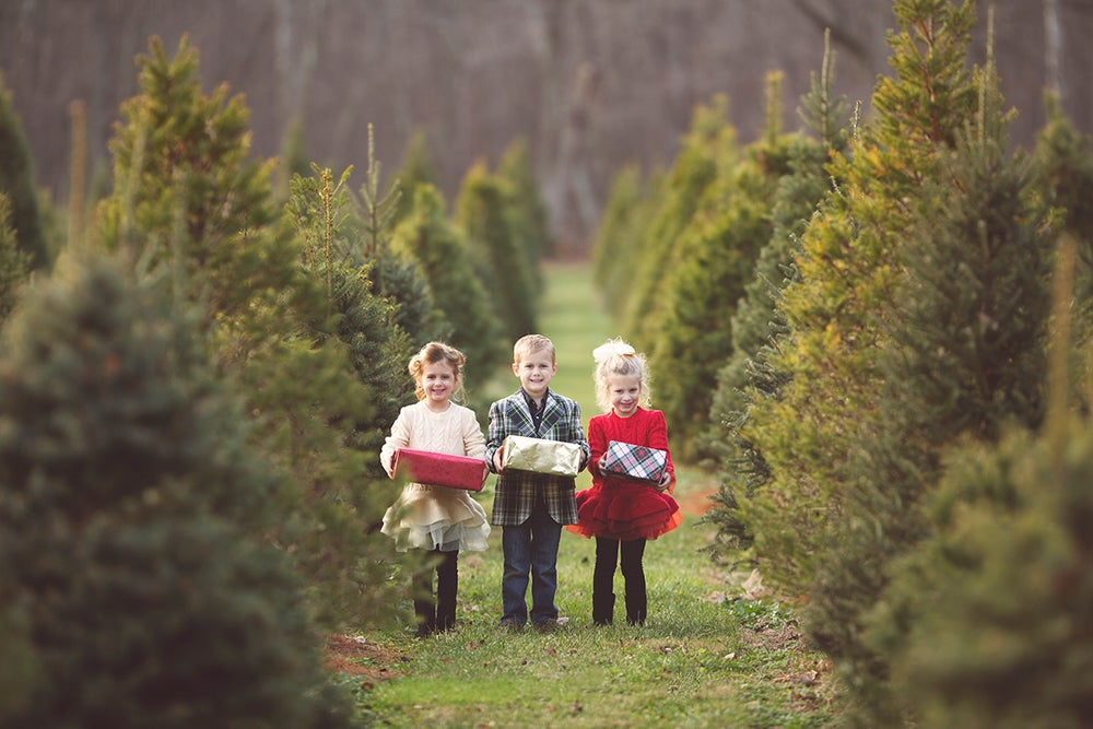 Image of Holiday Mini Sessions at Timber Valley Christmas Tree Farm