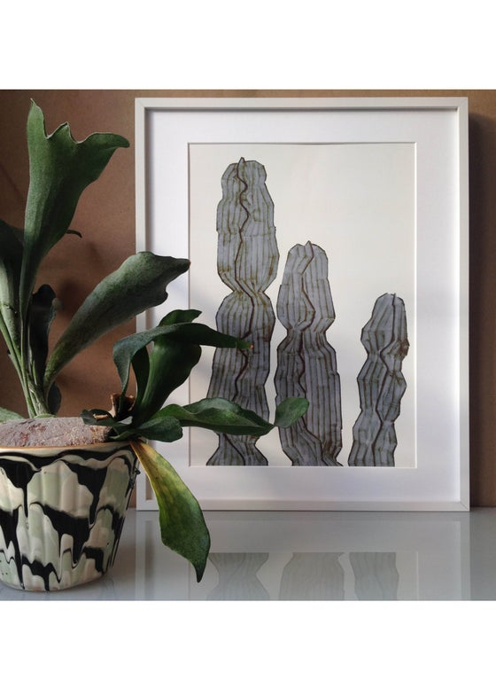 Image of  Euphorbia A3