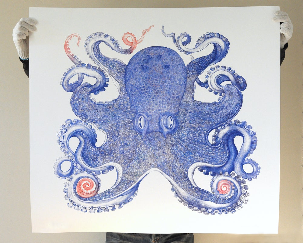 Image of Blue Octopus 36 x 40 inches Limited Edition of 25 Prints