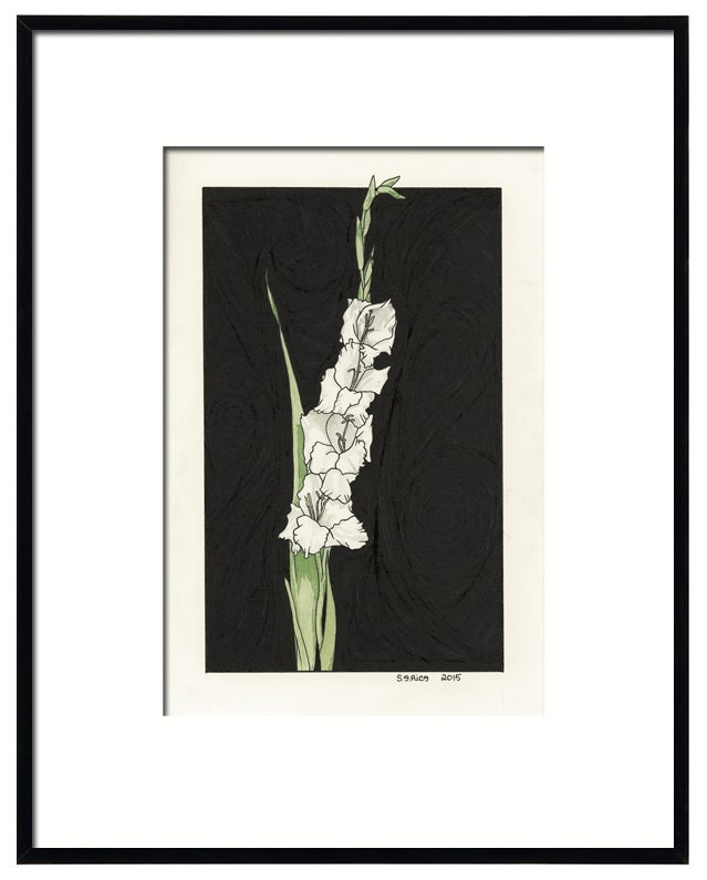 Image of Gladiolus