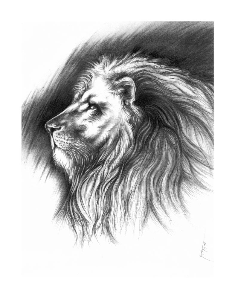 "Image of ""Majestic King"" Charcoal Lion - LIMITED or Unlimited Prints"