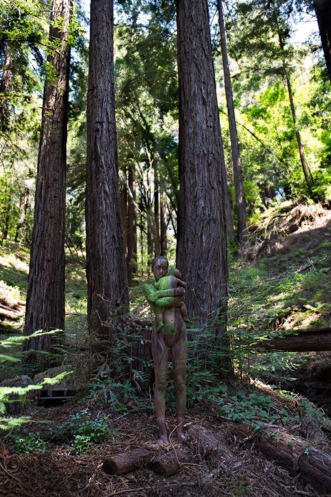 Image of Santa Cruz Redwoods Mother & Child
