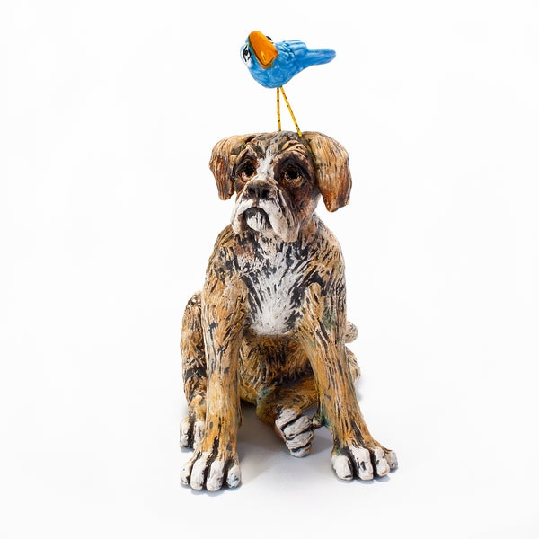 Image of Boxer Dog and Toucan Bird