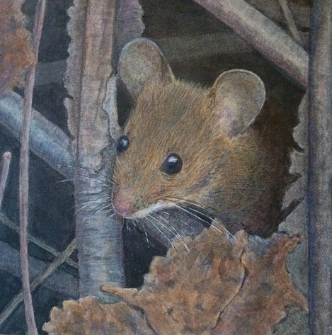 "Image of ""Wood Mouse""  6x6 print"